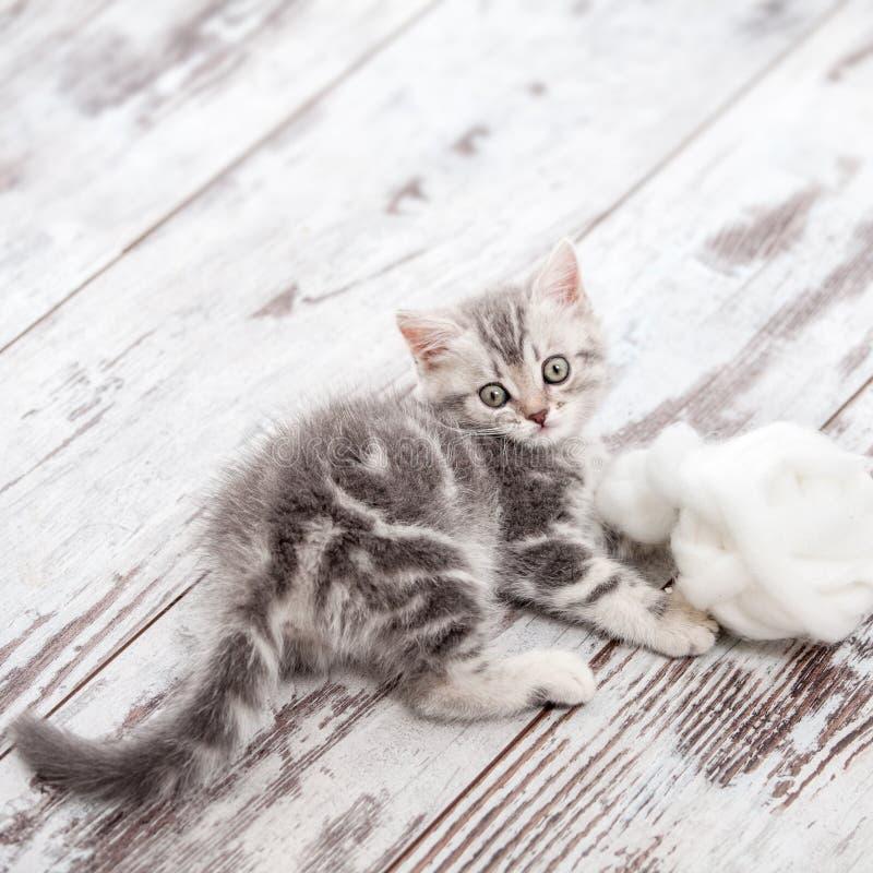Piccolo gatto a casa fotografia stock