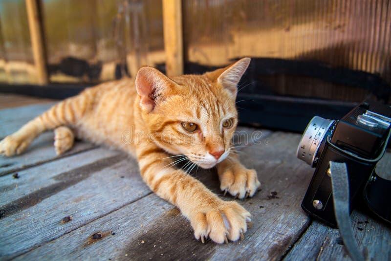 Piccolo gatto che prende selfie che esamina la macchina fotografica fotografia stock libera da diritti