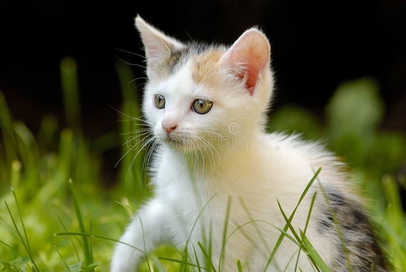 Piccolo gatto con i bei occhi immagini stock libere da diritti