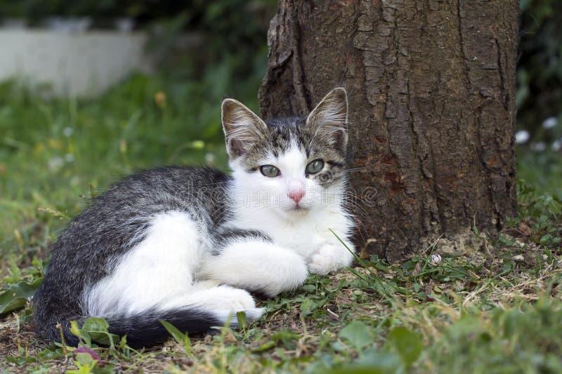 Piccolo gatto domestico immagine stock