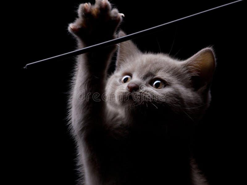 Piccolo gatto grigio in modo divertente fotografia stock libera da diritti