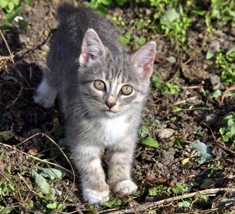 Piccolo gatto nel giardino immagine stock libera da diritti