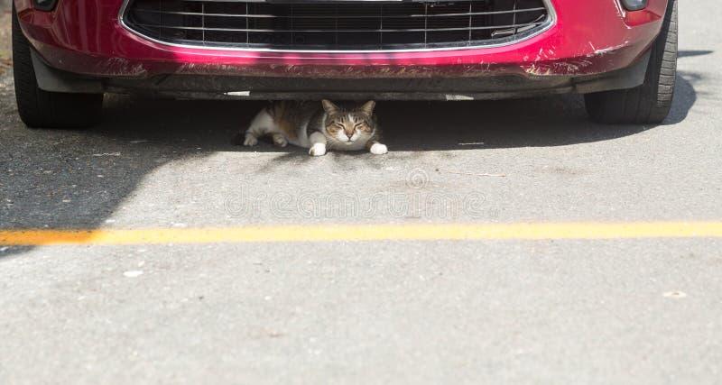 Piccolo gatto o gattino che si nasconde nell'ambito della parte anteriore dell'automobile immagini stock libere da diritti
