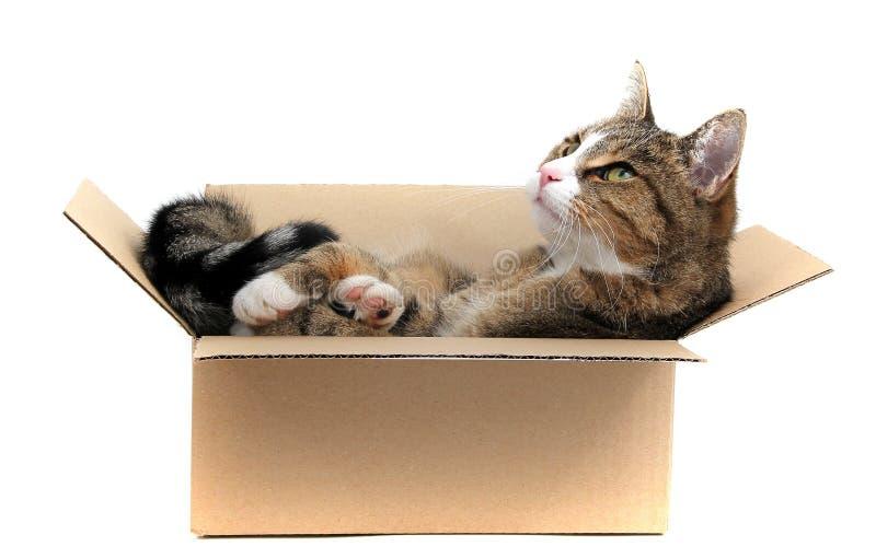 Piccolo gatto in scatola fotografia stock