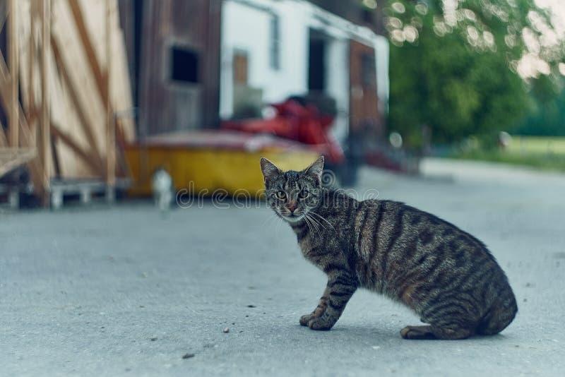 Download Piccolo Gatto Timido Dolce Su Un'azienda Agricola In Baviera Immagine Stock - Immagine di nazionale, felino: 117975405