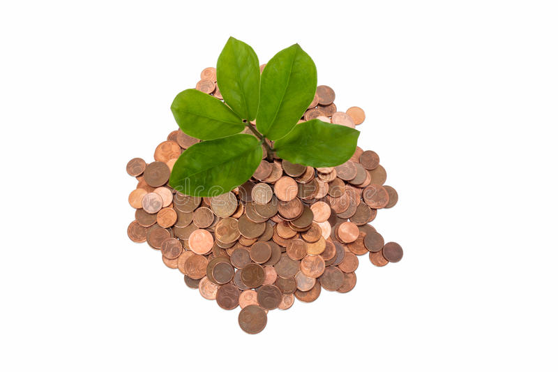 Piccolo germoglio della pianta che coltiva fuori un mucchio delle monete, vista dall'alto in basso immagine stock