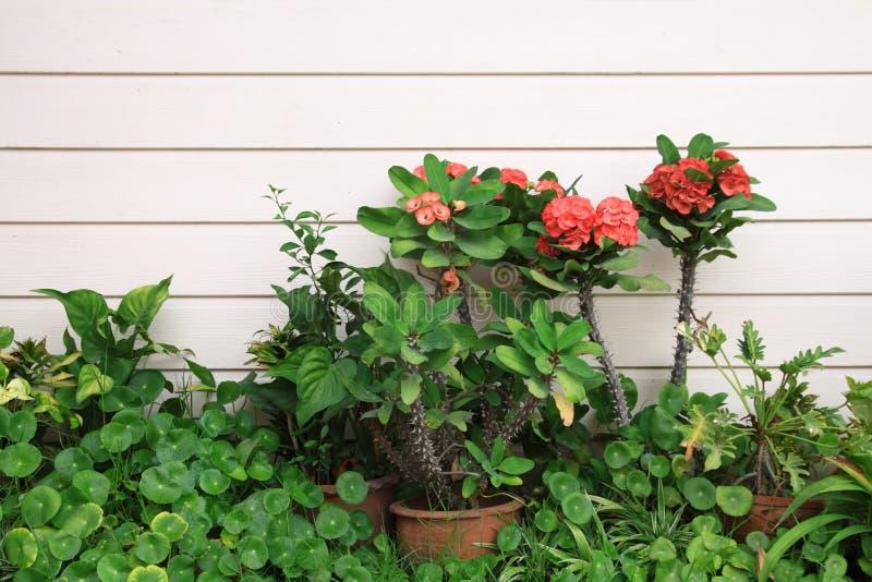 Piccolo giardino tropicale immagine stock immagine di - Giardino tropicale ...