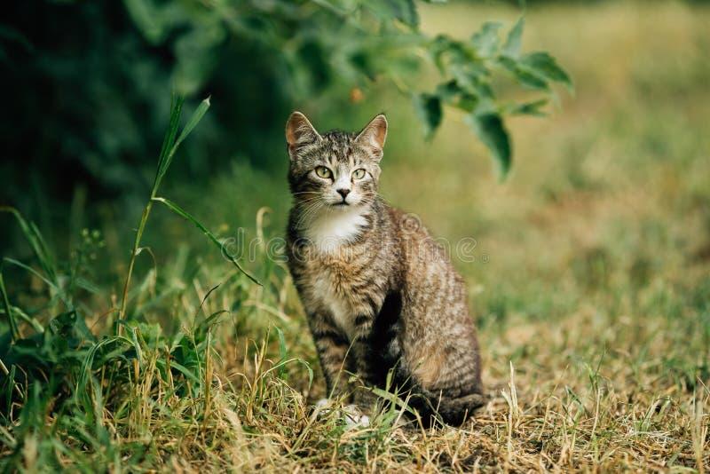 Piccolo Gray Cat Kitten In Grass sveglio immagini stock