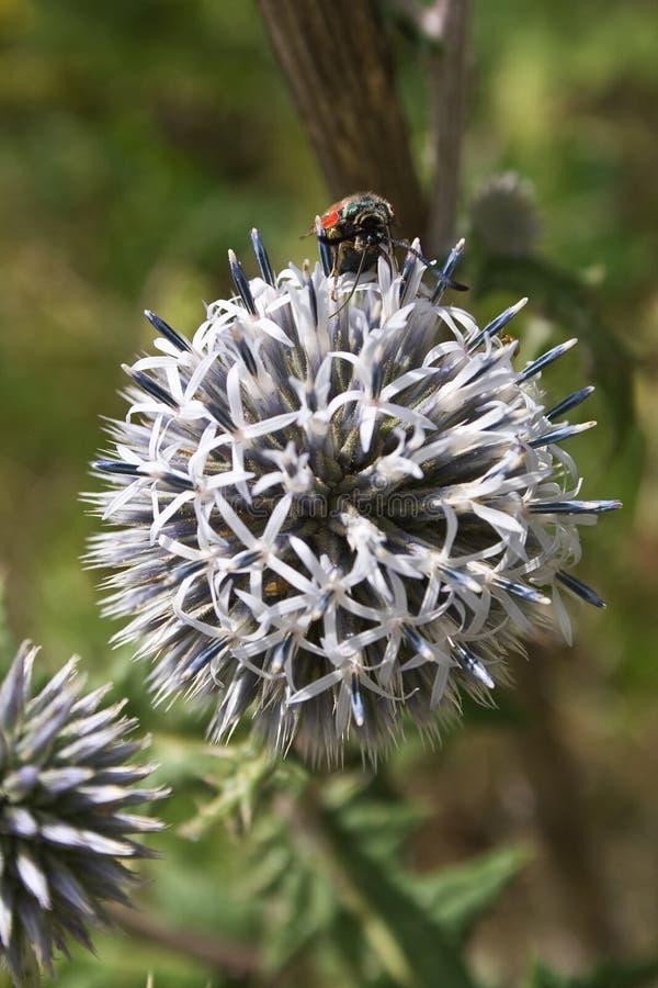 Piccolo insetto sul grande fiore immagine stock libera da diritti