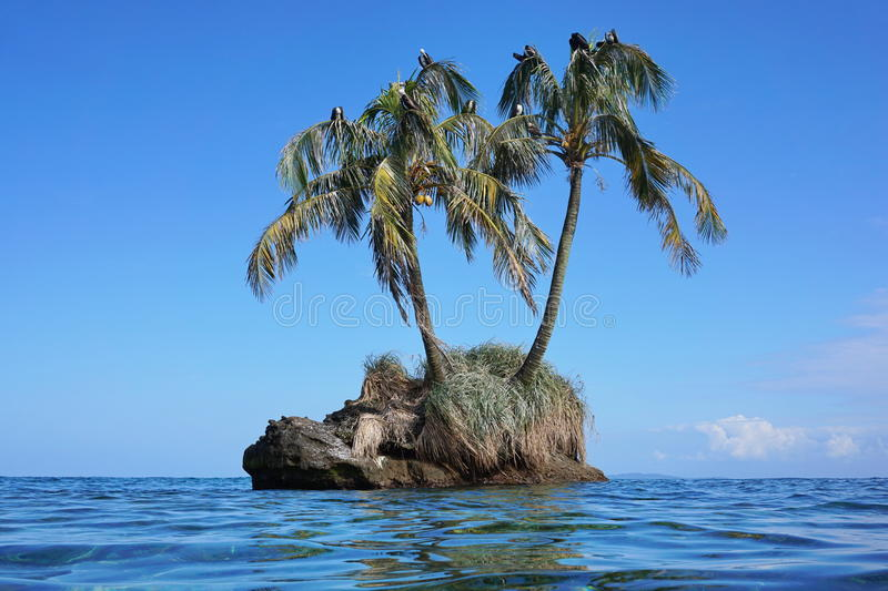 Piccolo isolotto con gli alberi del cocco e gli uccelli di mare immagine stock libera da diritti