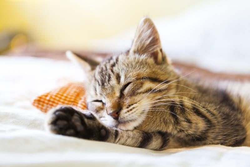 Piccolo Kitty immagini stock libere da diritti