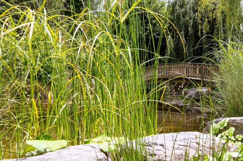 Piccolo lago artificiale, ponte di legno 6 fotografia stock libera da diritti