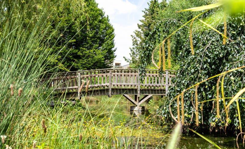Piccolo lago artificiale, ponte di legno 7 immagini stock libere da diritti