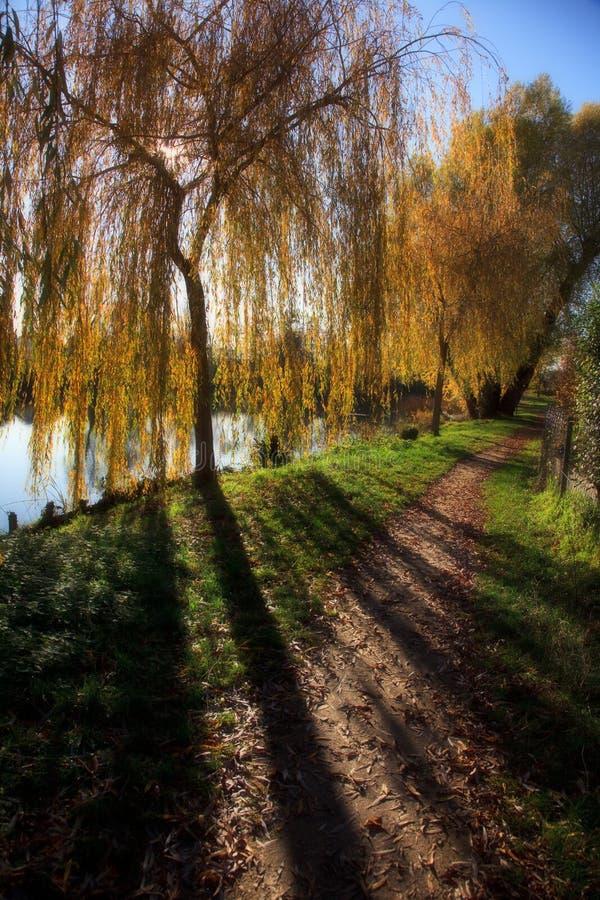 Piccolo lago con gli alberi in autunno immagine stock