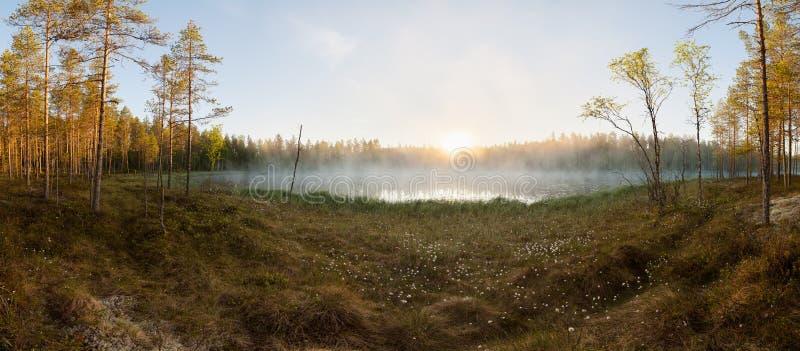 Piccolo lago della foresta ad alba fotografia stock libera da diritti