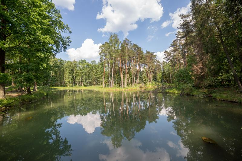 Piccolo lago nella foresta di primavera sotto il cielo nuvoloso sul paesaggio grandangolare di giorno soleggiato immagini stock libere da diritti