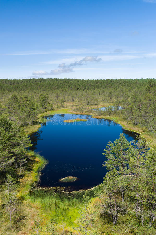 Piccolo lago scenico alla palude di Viru immagini stock
