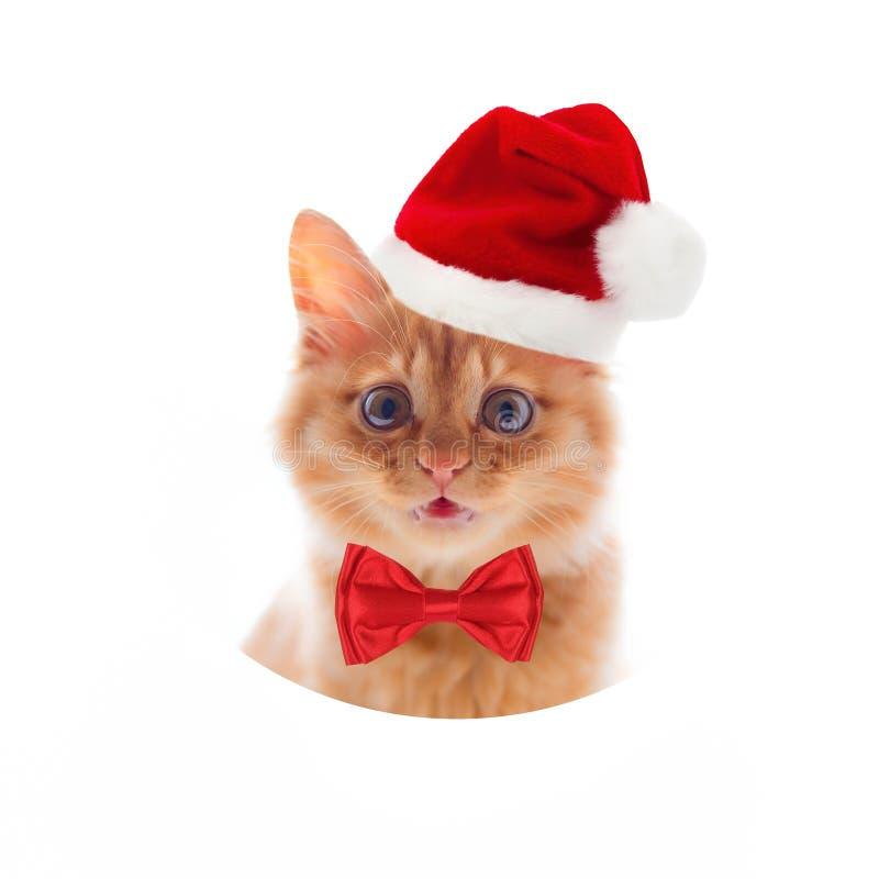 Piccolo meykun rosso del gattino su un fondo bianco in un cappello ed in una cravatta a farfalla dello spiritello malevolo fotografia stock