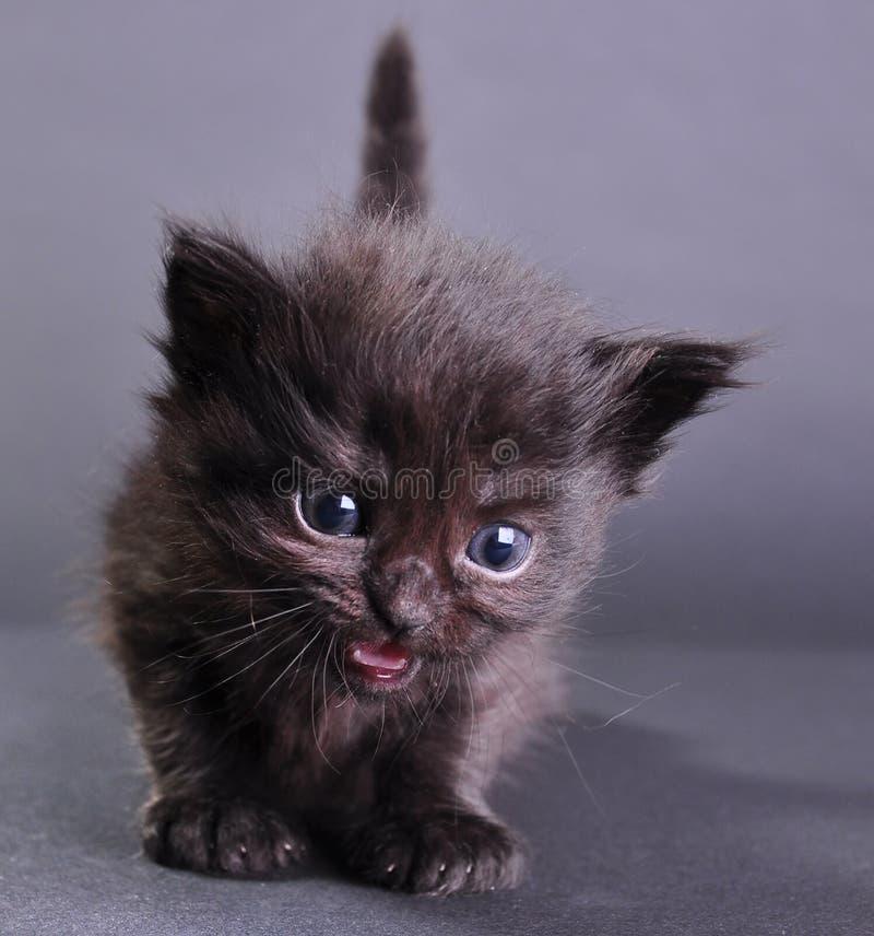 Piccolo miagolare nero del gattino fotografia stock libera da diritti