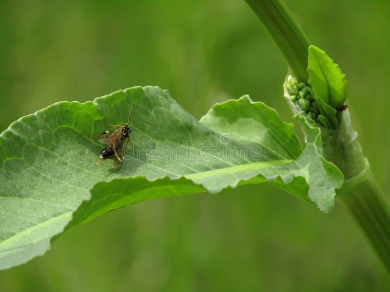 Piccolo mosca sulle foglie fotografia stock