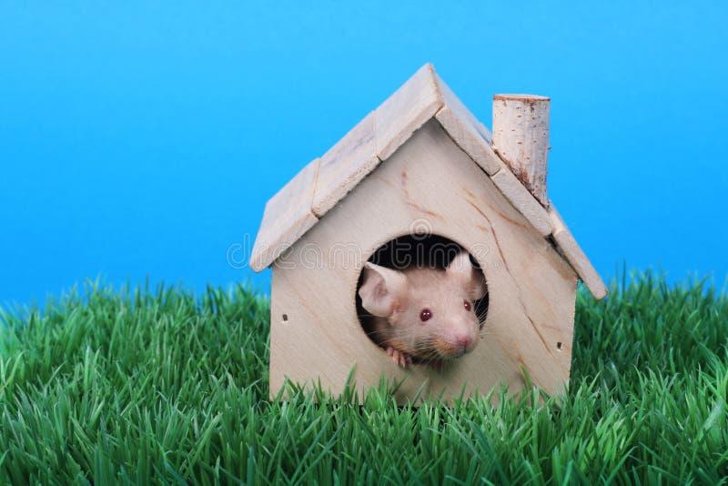Piccolo mouse immagine stock libera da diritti