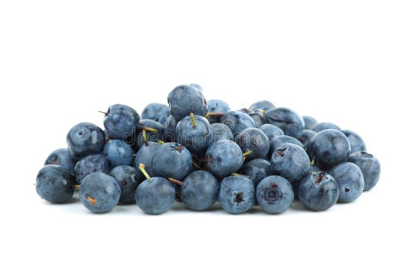 Piccolo mucchio dei billberries fotografia stock libera da diritti