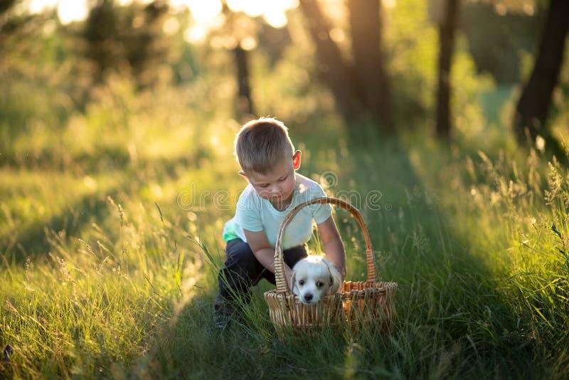Piccolo neonato mette un cucciolo sveglio in un canestro di vimini al tramonto nella foresta il concetto di amicizia, felicit?, l fotografie stock