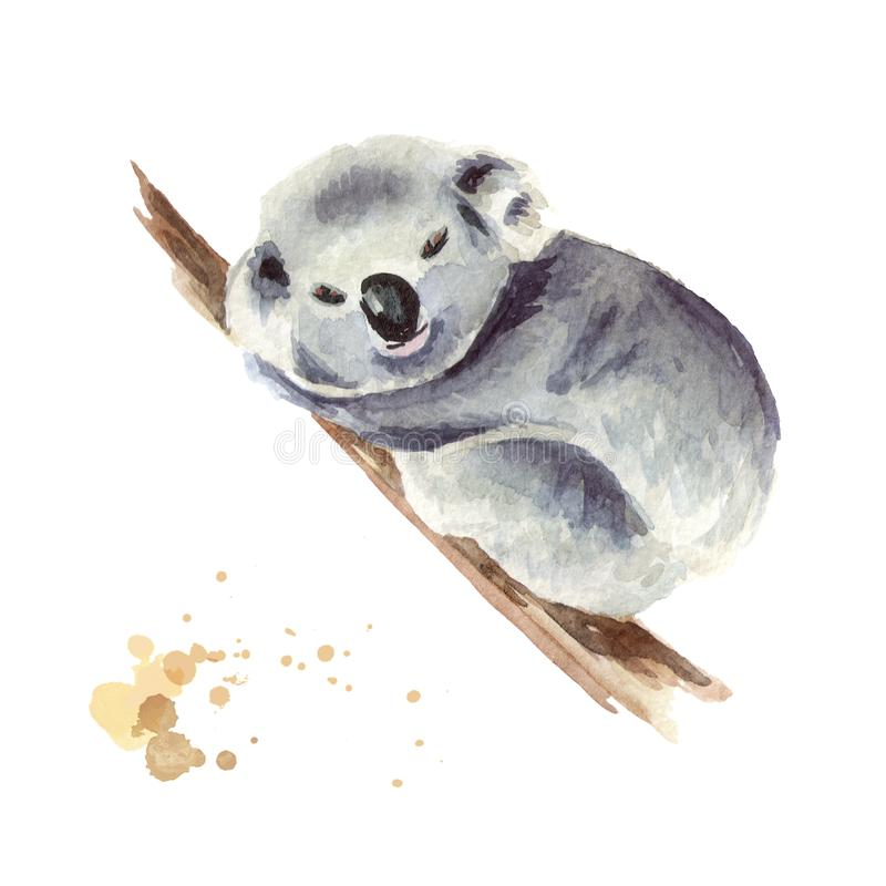 Piccolo orso di koala che si siede su un ramo di albero, isolato su fondo bianco Illustrazione disegnata a mano dell'acquerello illustrazione di stock