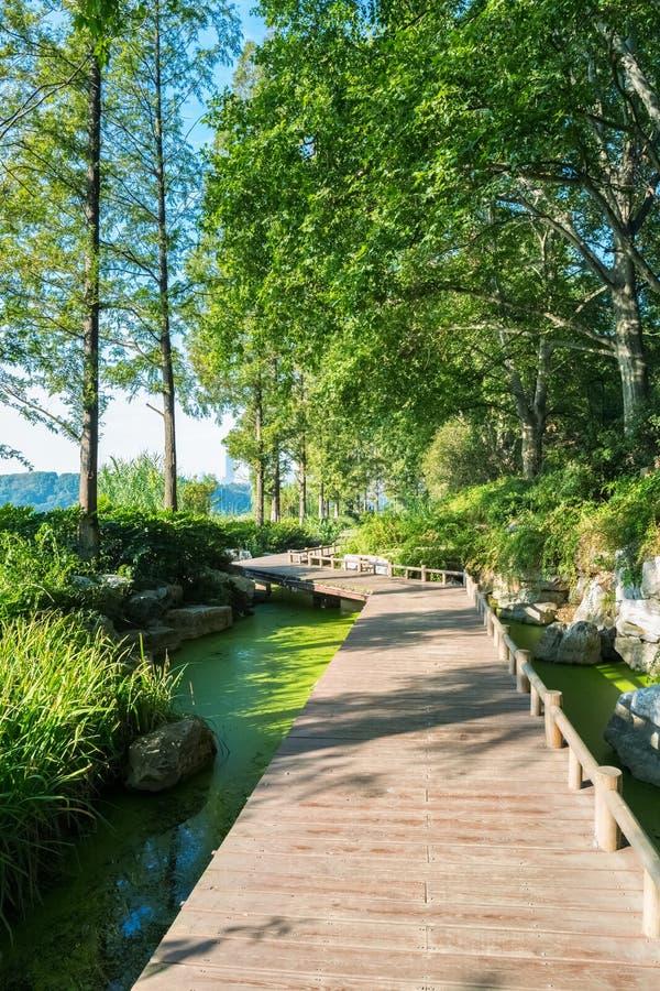 Piccolo percorso dal lago fotografia stock libera da diritti