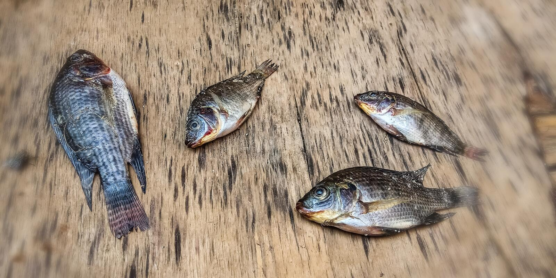 Piccolo pesce morto fotografia stock
