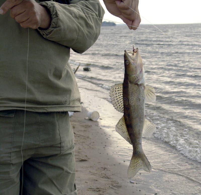 Piccolo pesce su una linea fotografia stock libera da diritti