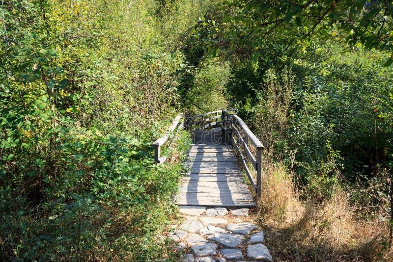 Piccolo ponte di legno nella foresta immagine stock