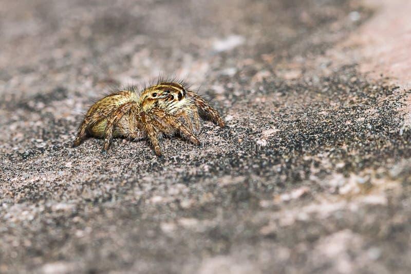 Piccolo ragno immagini stock libere da diritti