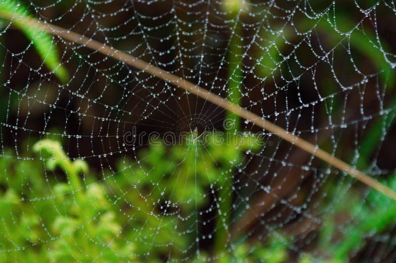 Piccolo ragno fotografie stock