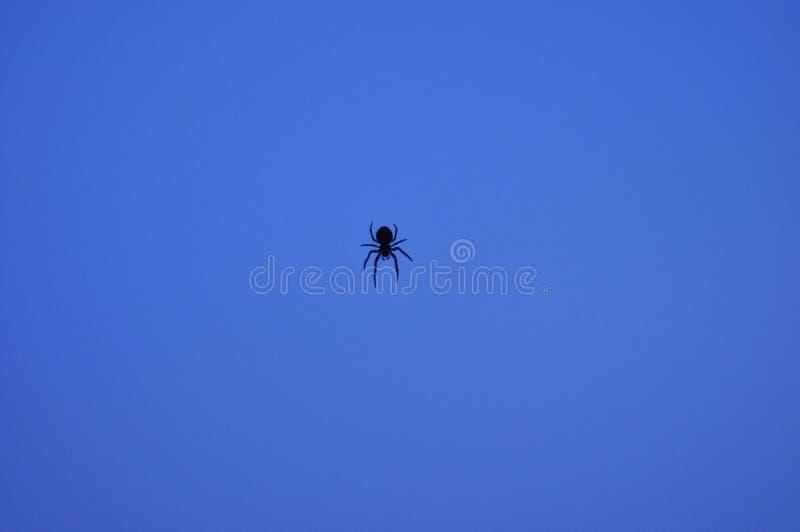 Piccolo ragno su un fondo blu su una ragnatela nella sera immagini stock
