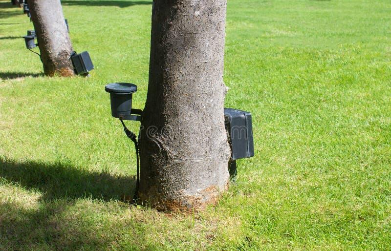 Piccolo riflettore del LED che splende sull'albero fotografia stock