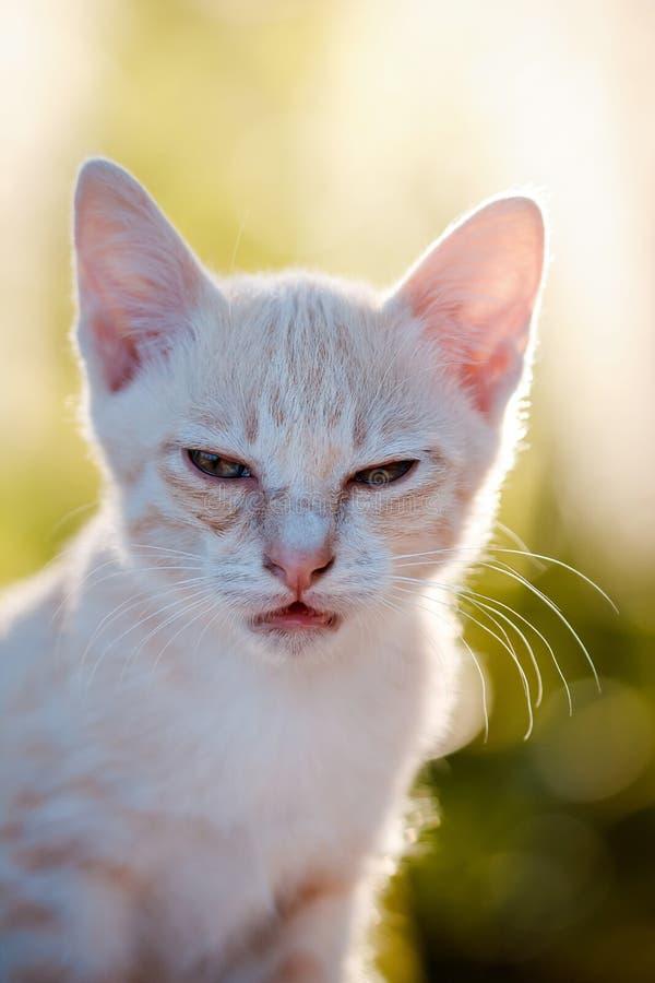 Piccolo ritratto del gatto fotografia stock immagine di - Immagine del gatto a colori ...