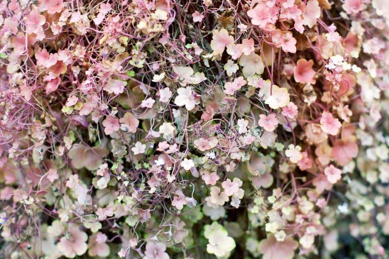 Piccolo rosa tenero e fine malva verde di struttura del fondo dei fiori e delle foglie sui macro scalatori, gillyflowers, ipomee fotografia stock