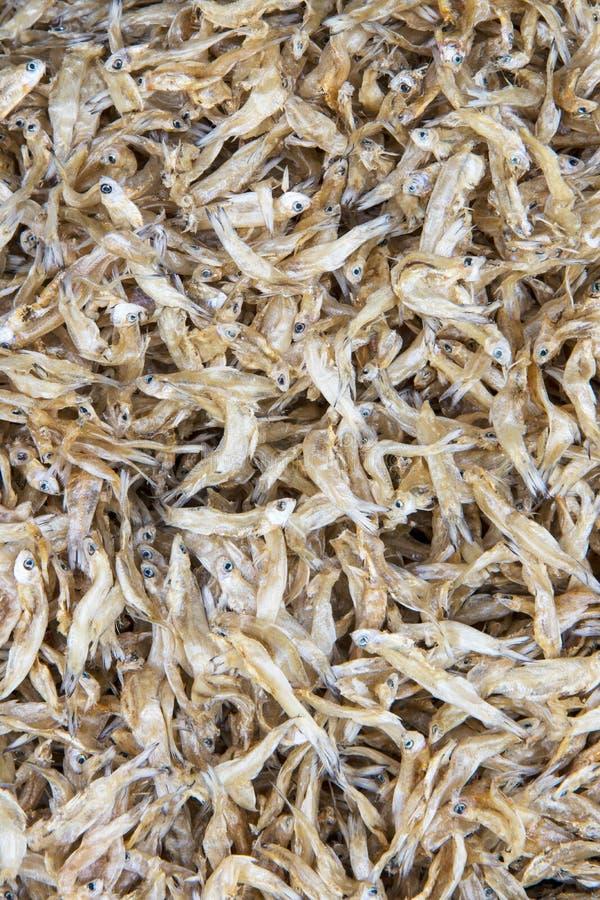 Piccolo salato del pesce secco fotografia stock