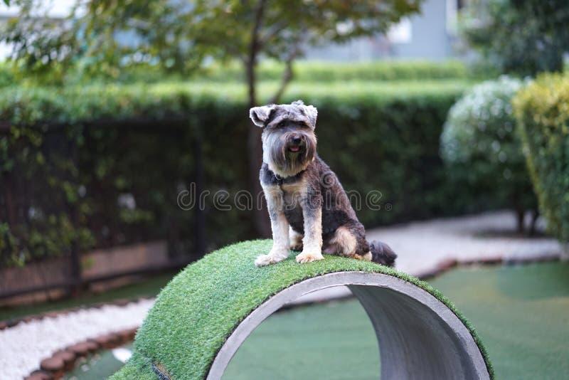 Piccolo seduta felice della razza del cane misto del terrier sulla vasca concreta fotografie stock