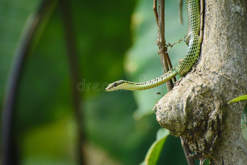 Piccolo serpente immagini stock