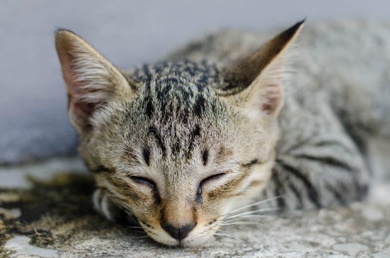 Piccolo sonno di Kitty immagine stock