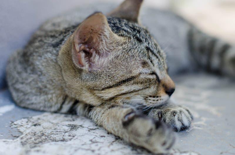 Piccolo sonno di Kitty fotografia stock