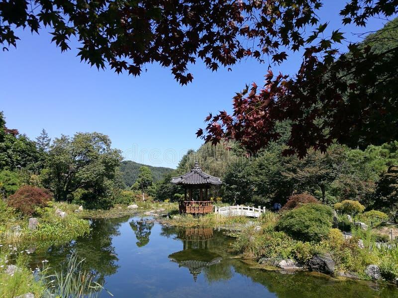 Piccolo stagno con il relection del padiglione nel giardino coreano di stile immagine stock libera da diritti
