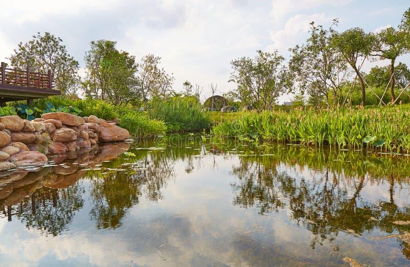 Piccolo stagno del giardino fotografia stock