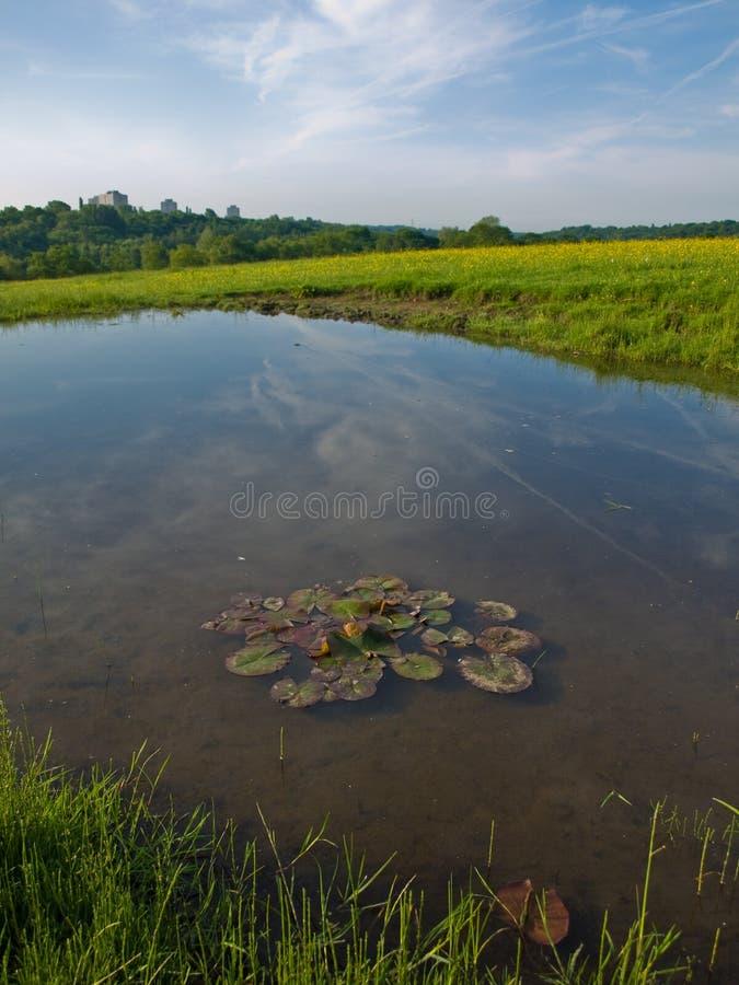 Piccolo stagno in un campo inglese con acqua Lillies fotografie stock