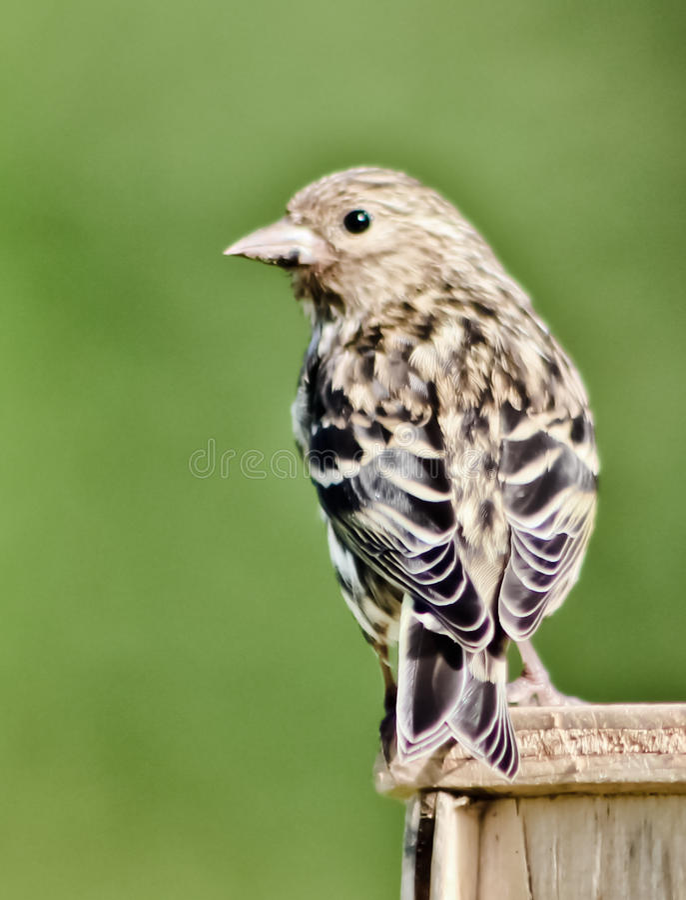 Piccolo uccello immagini stock libere da diritti