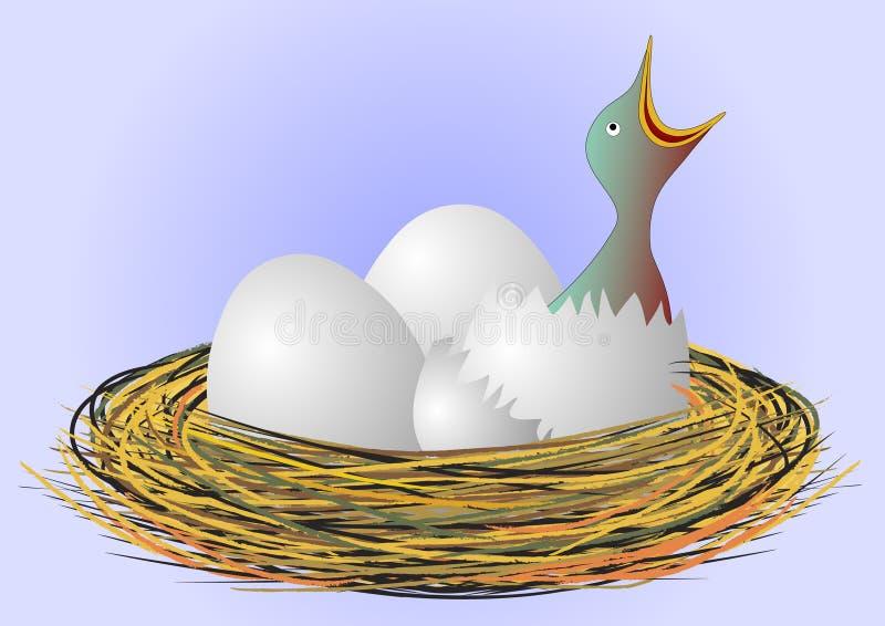 Piccolo uccello affamato nel nido illustrazione di stock