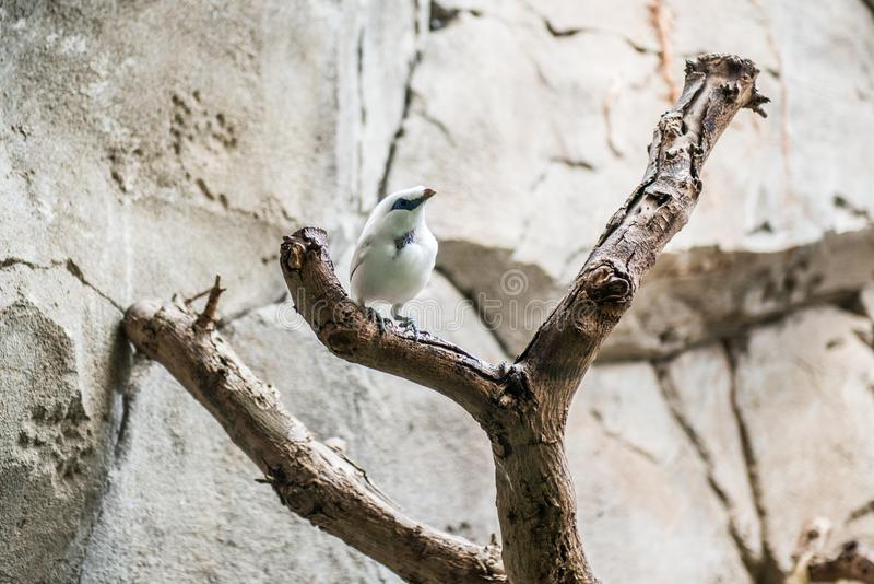 Piccolo uccello esotico fotografia stock