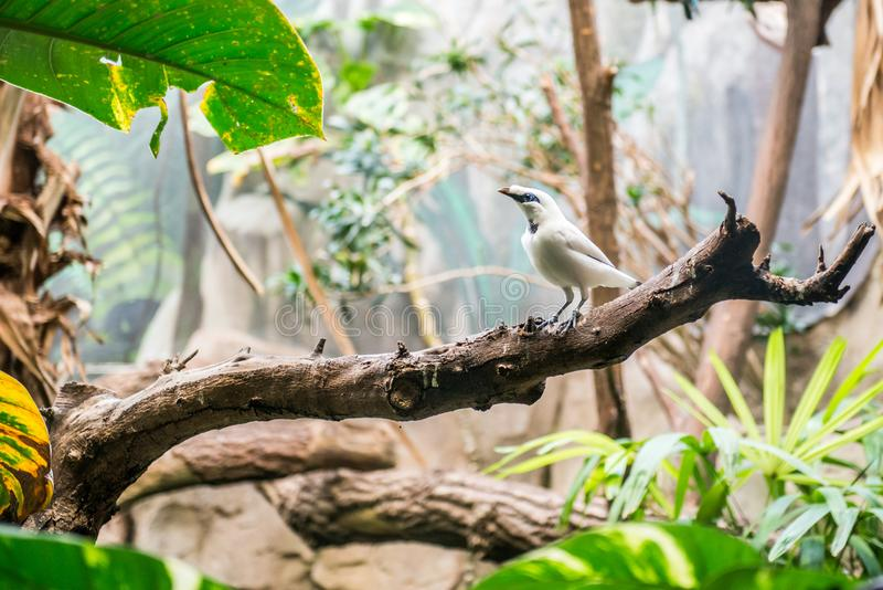 Piccolo uccello esotico immagine stock